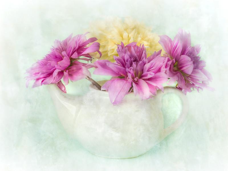 Teapot Dahlias