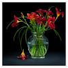 Daylilies In Black