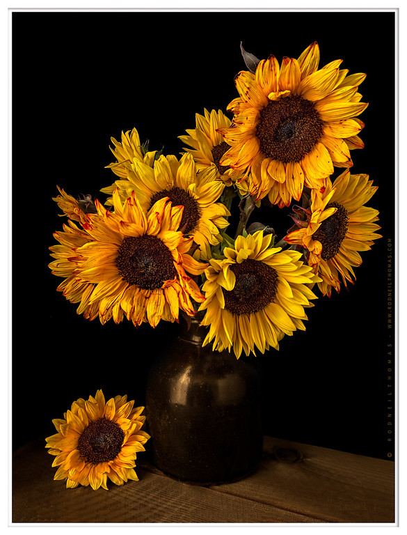 Sunflowers In Black