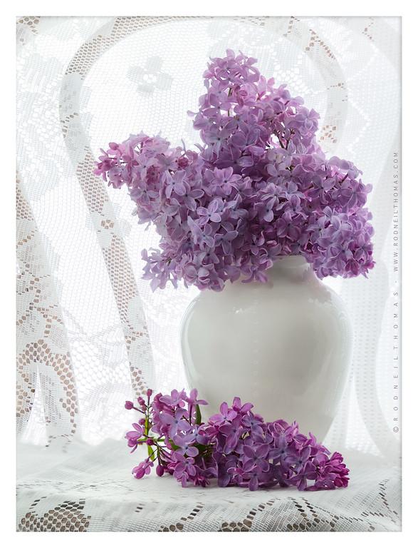 Lilacs & Lace II