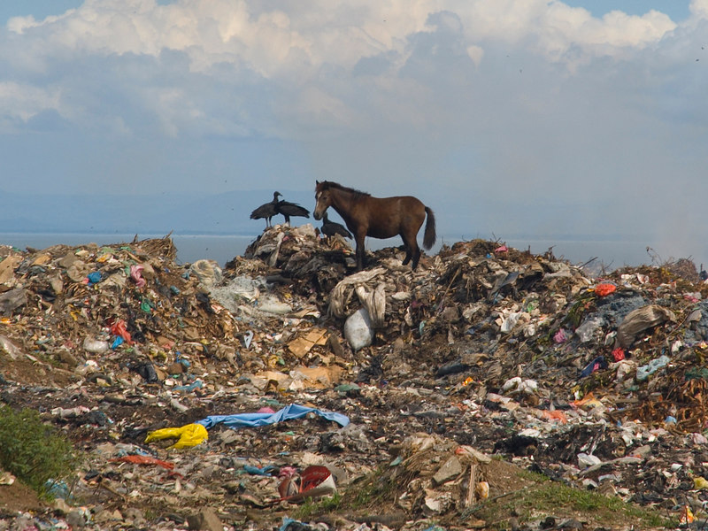 "Nicaragua Mission November 2006<br /> La Chureca ""The Dump""<br /> This is a young horse."