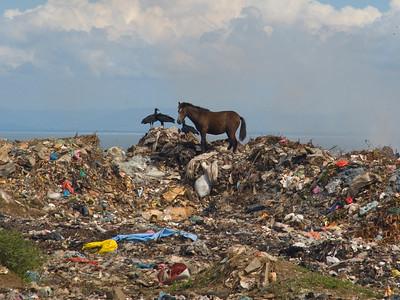 "Nicaragua Mission November 2006 La Chureca ""The Dump"" This is a young horse."