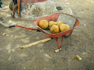 Young Cocanut, Wheelbarrow