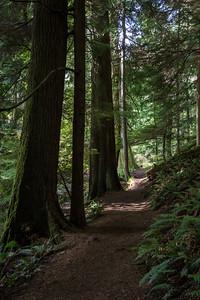 Orcas Cascade Trail