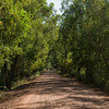 Trees lined dirt road, Angkor Thom, Siem Reap, Cambodia