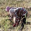 Two farmers harvesting rice paddy, Preah Dak, Siem Reap, Cambodia