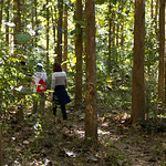 Tourists walking in forest, Luang Prabang, Laos