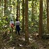 Tourists walking in forest, Luang Prabang, Laos