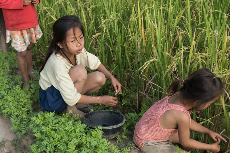 Girls working in rice field, Kamu Lodge, Ban Gnoyhai, Luang Prabang, Laos
