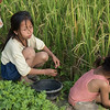 Girls working in rice field, Kamu Lodge, Ban Gnoyhai, Luang Prabang, Laos