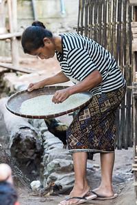 Woman winnowing rice in basket, Ban Gnoyhai, Luang Prabang, Laos