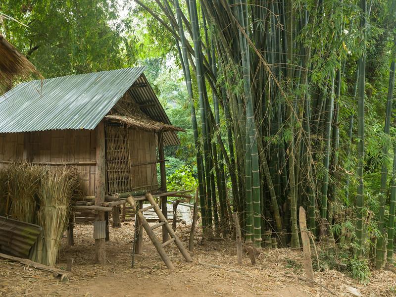 Hut in bamboo forest, Ban Gnoyhai, Luang Prabang, Laos