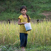 Portrait of local adolescent girl standing in rice field, Kamu Lodge, Ban Gnoyhai, Luang Prabang, Laos