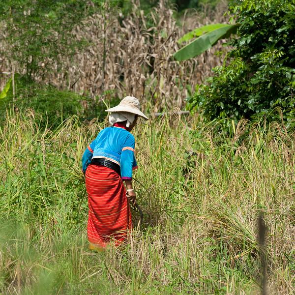 Thai10134.jpg