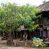 Thai10252.jpg