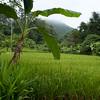 Thai10158.jpg