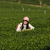 Woman in tea plantation, Chiang Rai, Thailand