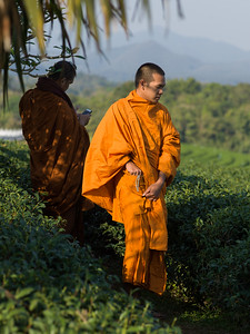 Two Buddhist monks in tea plantation, Chiang Rai, Thailand