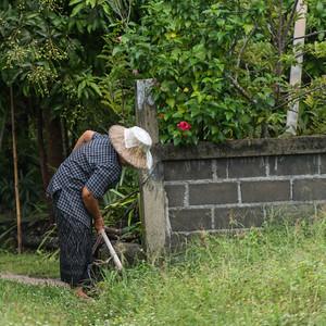 Woman working in garden, Koh Samui, Surat Thani Province, Thailand