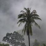 Trees covered in fog, Koh Samui, Surat Thani Province, Thailand