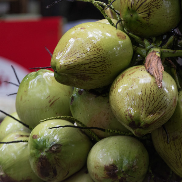 Close-up of heap of coconuts, Koh Samui, Surat Thani Province, Thailand