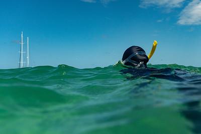Person snorkeling in ocean, Port Douglas, Queensland, Australia