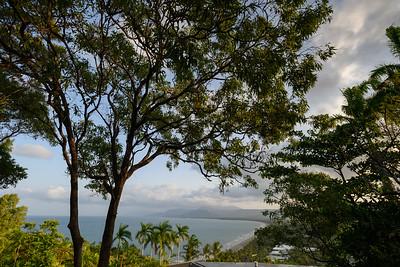 View of trees, Port Douglas, Queensland, Australia