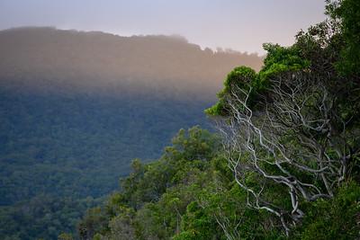 Scenic view of trees on mountain, Queensland, Australia