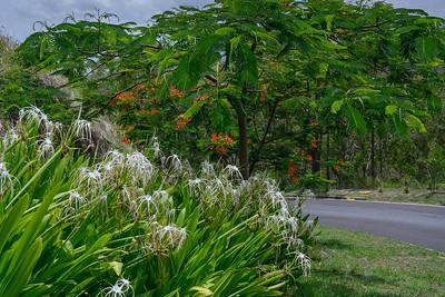 Trees and plants at roadside, Queensland, Australia