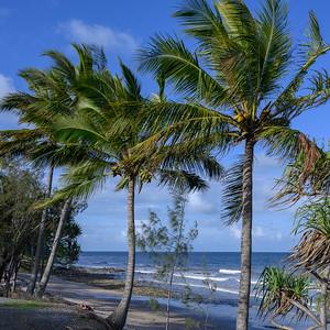 Palm trees on the beach, Port Douglas, Far North Queensland, Queensland, Australia