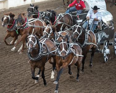 Chuckwagon racing at the annual Calgary Stampede, Calgary, Alberta, Canada