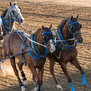 Horses chuckwagon racing at the annual Calgary Stampede, Calgary, Alberta, Canada