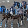 Horses at chuckwagon race during Calgary Stampede, Calgary, Alberta, Canada