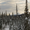 Snow covered trees with mountains in winter, Yoho National Park, British Columbia, Canada