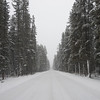 Snow covered road with trees, Lake Louise, Banff National Park, Alberta, Canada
