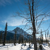 Trees with mountain in winter, Field, British Columbia, Canada
