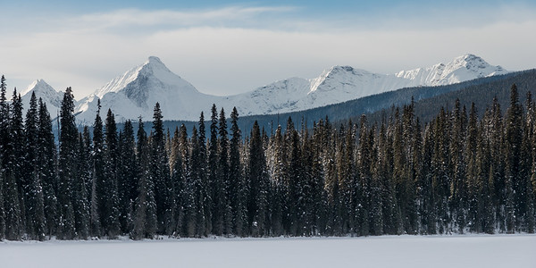Snow covered trees and mountain in winter, Field, British Columbia, Canada