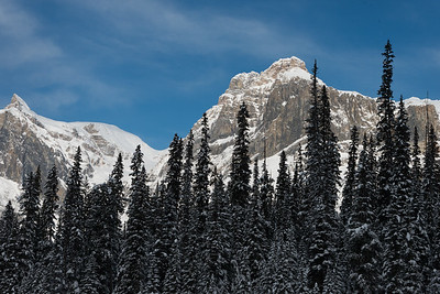 Snow covered trees with mountain in winter, Field, British Columbia, Canada