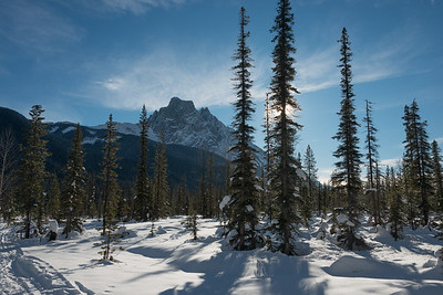Snow covered trees with mountains in winter, British Columbia, Canada