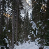 Snow covered trees with pathway in winter, Yoho National Park, British Columbia, Canada