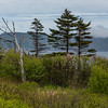 Trees along coast, Dingwall, Cabot Trail, Cape Breton Island, Nova Scotia, Canada