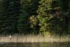 lake12152.jpg