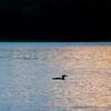 lake14115