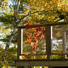 Autumn leaves beside a deck, Lake of The Woods, Ontario, Canada