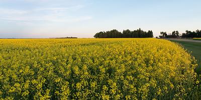 prairies12040.jpg