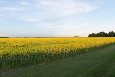prairies12025.jpg