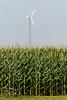 Wind turbine in corn field, Summerside, Prince Edward Island, Canada