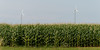 Wind turbines in corn field, Summerside, Prince Edward Island, Canada