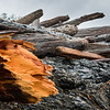 Driftwood on coastline, Pacific Rim National Park Reserve, British Columbia, Canada