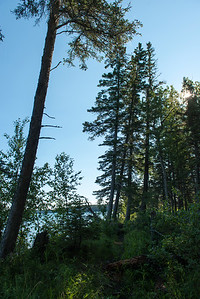 Trees in a forest, Riding Mountain National Park, Manitoba, Canada